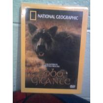 Dvd National Geographic Dinosaurios Lobo Gigante Prehistoria