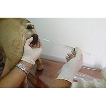 Sondas Pipetas Canulas Inseminacion Bulldog Pitbull Bully