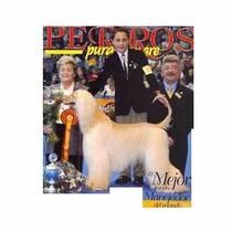 Revista De Perros Xoloitzcuintle Agosto 2002 Mejor Manejador