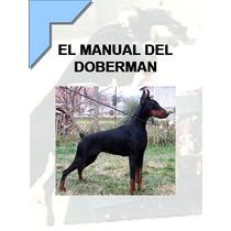 El Manual Del Doberman + Regalos ¡ Conoce A Tu Perro ¡ Omm