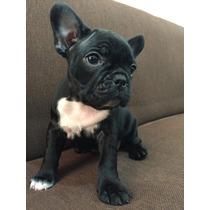 Hermosos Cachorros Bulldog Francés De 7 Semanas!