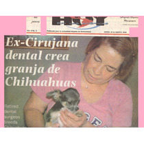 Chihuahueño Pelo Largo Bolsillo Azul Blanco Perro Chihuahua