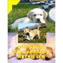 Manual Del Labrador Retriever + Regalos ¡ Conocelo ¡ Omm