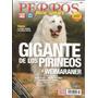 Cachorros Gigante De Los Pirineos Machos Y Hembras Disponibl