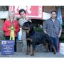 Rottweiler Cachorros Hijos De Picasso De Criadero Timit Tor