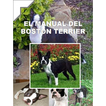 Boston Terrier Conocelo + Educacion Y Adiestramiento ¡¡