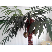 Palmera Alta Coconus Artificial Maa