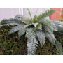 Planta Helecho Artificial , Arboles,palmas Vbf