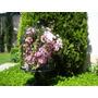 Flores De Seda Artificial Exx