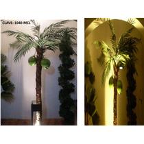 Plantas Decorativas Sp0