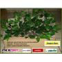 Varas De Ficus Artificial Sp0