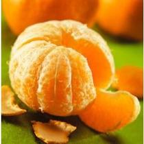 Arbol De Mandarina, Mandarinos, Clementina.