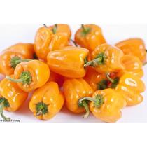 20 Semillas Habanero Naranja Picante Huerto