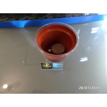 Semillas Venus Atrapa Moscas En Kit De Siembra + Regalo