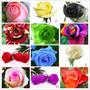 600 Semillas Rosas Exoticas 12 Colores Envio Gratis