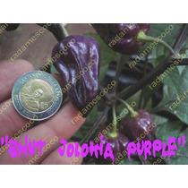 Semillas De Chile Bhut Jolokia Purple (de Los Mas Picosos)