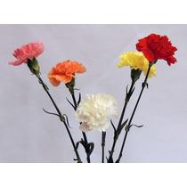 Semillas Clavel Con Sustrato Envio Gratis Planta Jardin Flor