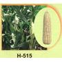 Maiz Hibrido 515 20kg Semilla Para Grano De Temporal