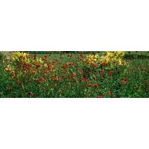 Poster (96 X 30 Cm) Flowers In A Botanical Garden Buffalo