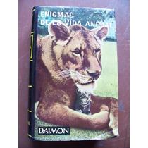 Enigmas De La Vida Animal-aut-rudolf Freericks-ed-daimon-rm4