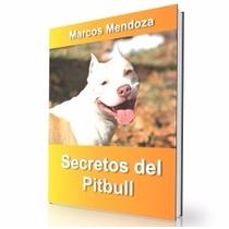 Como Educar A Un Pibull - Guía De Adiestramiento Raza Pibull