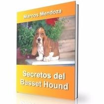 Como Educar A Un Basset Hound - Guía De Adiestramiento Raza