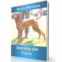 Como Educar A Un Perro Vizsla - Guía De Adiestramiento