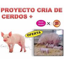 Proyecto Cria Cerdos Tecnica Engorde Cochinos Ganado Porcino