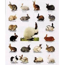 Cunicultura - Conejos
