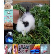 Conejos Enanos Con Super Paquete ....