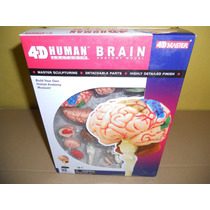 Rompecabezas 4d Modelo Anatomico Cerebreo Humano