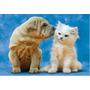 14806 Sharpei Perro Y Gato Blanco Rompecabezas 500 Pzs Educa