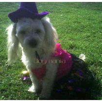 Brujita Royal Disfraz Halloween P/ Perrita Talla Cuatro Hdm
