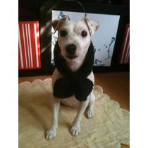 Bufandas Tejidas Para Tu Mascota!