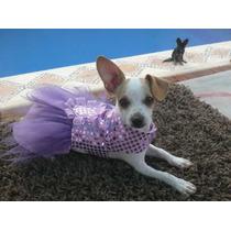 Ropa Para Perro,, Hermoso Vestido Para Esa Ocasion Especial!
