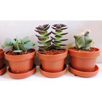 Adorno Para Sala, Plantas Miniatura, Cactus, Suculentas