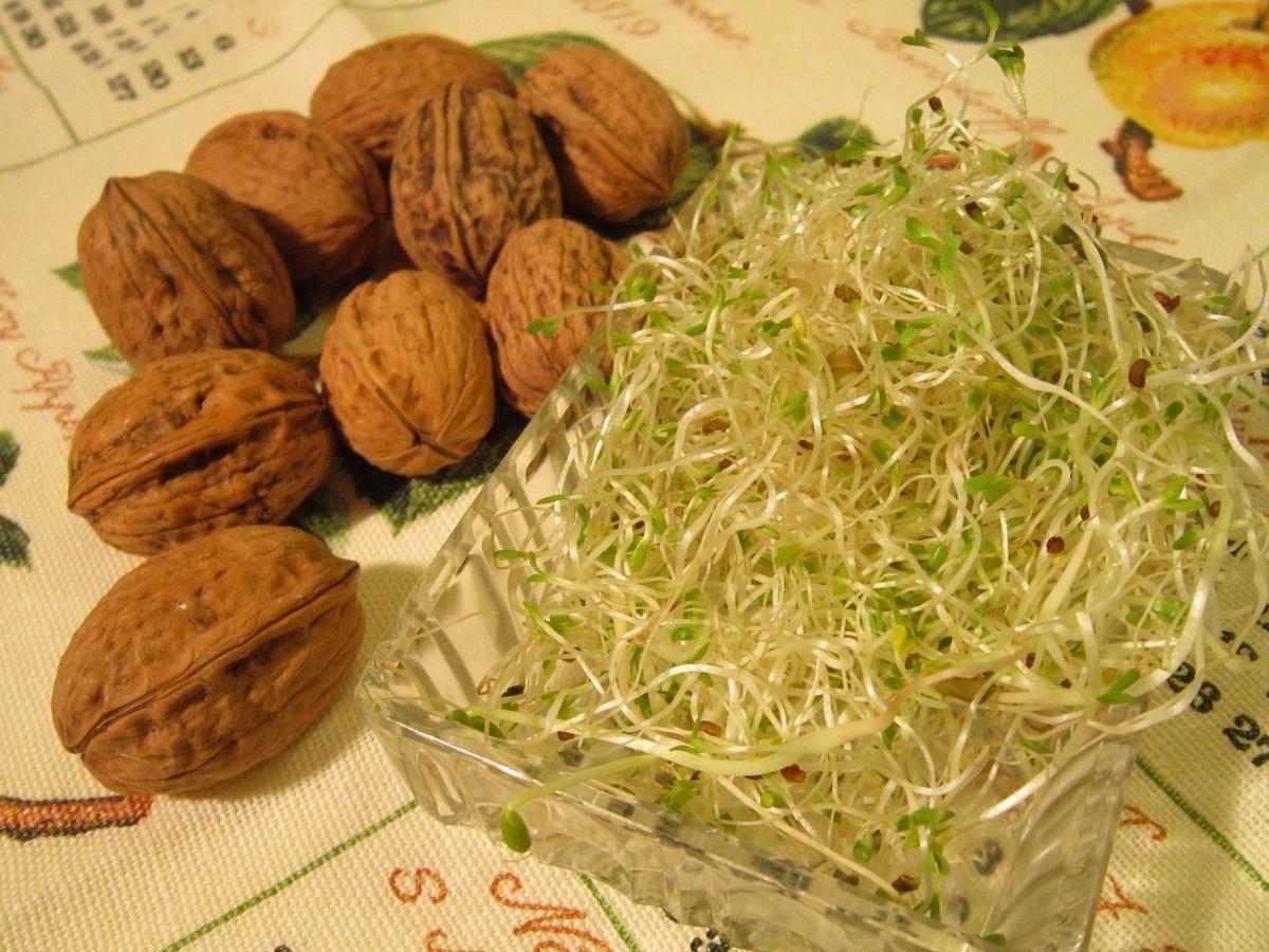 Semilla de alfalfa para germinar y sembrar germinado 1 kg for Plantar hortensias semillas