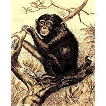 Tapetes Minimalistas Animal Print Envio Gratis