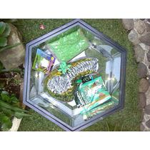 Tortuguero Hexagonal Paquete Seis Piezas En Total C Comida