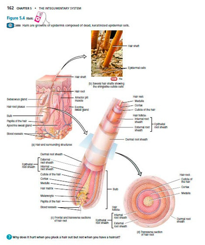 Descargar Tortora Anatomia Y Fisiologia PDF Download
