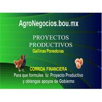 Inicia Negocio Gallinas Proyecto Productivo Corrida Financie