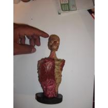 Busto Zombie Articulación En Boca Y Cabeza, Resident Evil
