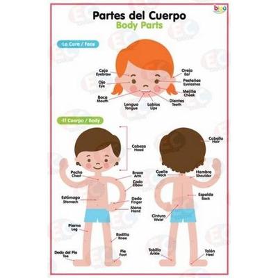 Poster partes del cuerpo y prendas biling e 2 vistas de for Bedroom y sus partes en ingles